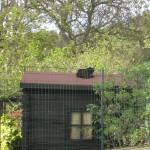 Il gatto sul tetto che scotta