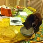 Piatti di vetro, selfie, ciotola con acqua (non per Ninì) e carta di riso